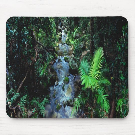 Beautiful Daintree National Park Mouse Pad