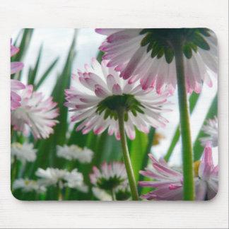 Beautiful daisy flowers photo mouse pad