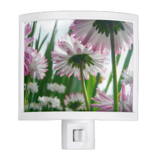 Beautiful daisy flowers photo night lite
