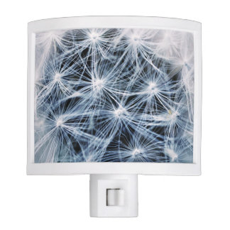 beautiful delicate dandelion flower photograph nite light