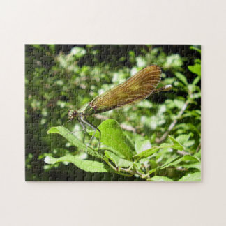 Beautiful Demoiselle Photo Puzzle with Gift Box
