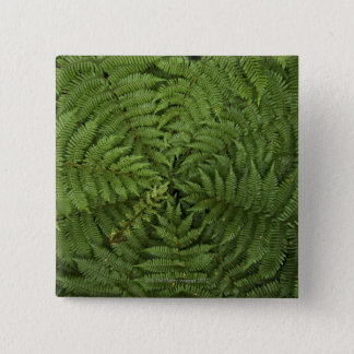 Beautiful detail of young ponga fern tree in 2 inch square button