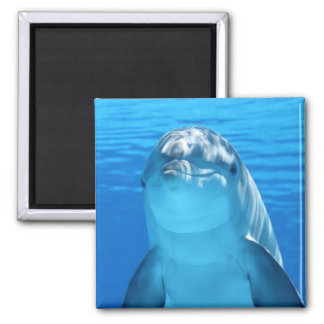 Beautiful dolphin square magnet