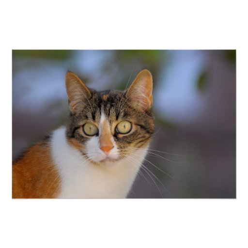 beautiful domestic cat, head portrait, polychrome, posters