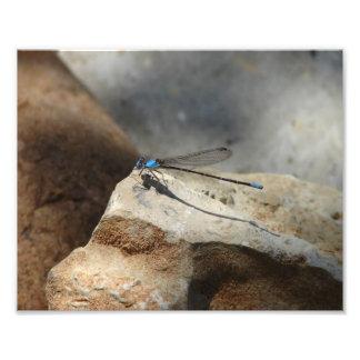 Beautiful Dragonfly Photo Art