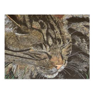 Beautiful Dreamer (sleeping tabby) Postcard
