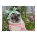 Beautiful dressed up Chinese pug image Postcard