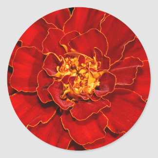 Beautiful Durango Red Marigold Classic Round Sticker