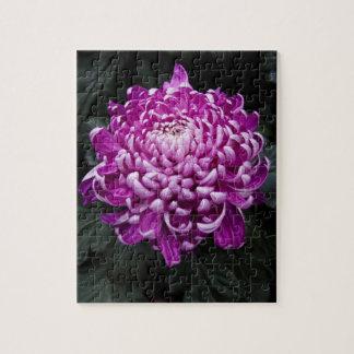 Beautiful Fall Chrysanthemum Floral Photo Puzzles