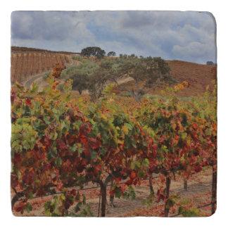 Beautiful Fall Vineyard Tuscan Kitchen Trivet