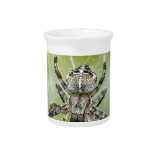 Beautiful Falling Spider on Web Drink Pitcher