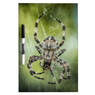 Beautiful Falling Spider on Web Dry-Erase Board