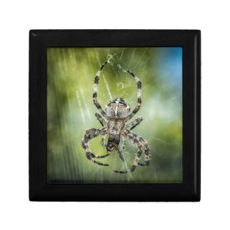 Beautiful Falling Spider on Web Jewelry Boxes
