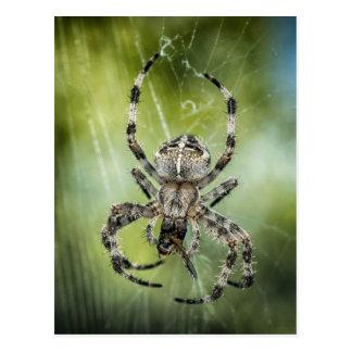 Beautiful Falling Spider on Web Postcard
