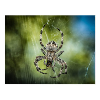 Beautiful Falling Spider on Web Postcard