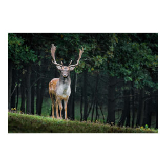 Beautiful Fallow Deer Nature Scenery Poster