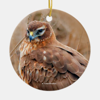Beautiful Female Northern Harrier in the Marsh Ceramic Ornament