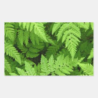 Beautiful fern leaves sticker