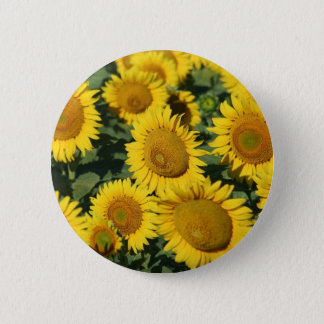 Beautiful Field of Sunflowers 2 Inch Round Button