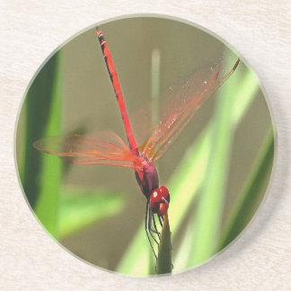 Beautiful Firecracker Dragonfly Coaster