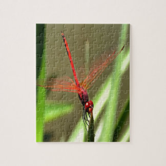 Beautiful Firecracker Dragonfly Jigsaw Puzzle