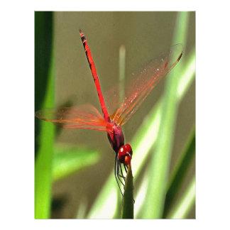 Beautiful Firecracker Dragonfly Letterhead