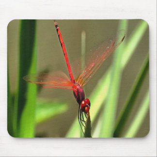 Beautiful Firecracker Dragonfly Mouse Pad