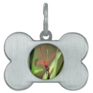 Beautiful Firecracker Dragonfly Pet Name Tag