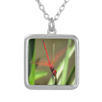 Beautiful Firecracker Dragonfly Silver Plated Necklace