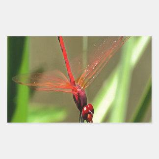 Beautiful Firecracker Dragonfly Sticker