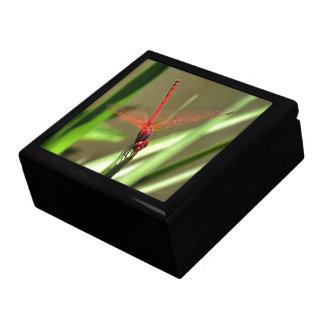 Beautiful Firecracker Dragonfly Trinket Box