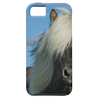 BEAUTIFUL FJORD PONY HORSE STALLION iPhone 5 COVERS