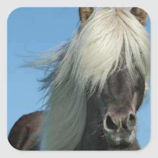 BEAUTIFUL FJORD PONY HORSE STALLION SQUARE STICKER
