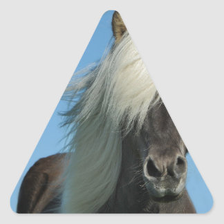 BEAUTIFUL FJORD PONY HORSE STALLION TRIANGLE STICKER