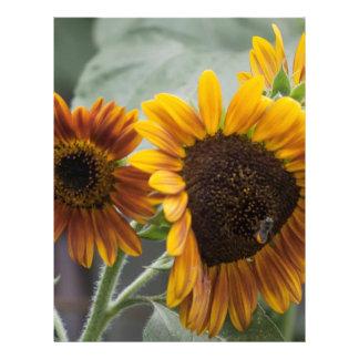 Beautiful Florida Sunflowers Letterhead Design