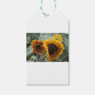 Beautiful Florida Sunflowers Pack Of Gift Tags