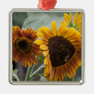 Beautiful Florida Sunflowers Silver-Colored Square Ornament