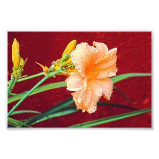 Beautiful flower art photo print