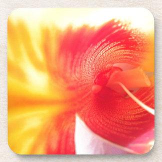 Beautiful Flower Beverage Coasters