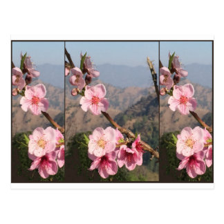 Beautiful Flower India UttraKHAND Fruit plantation Postcard