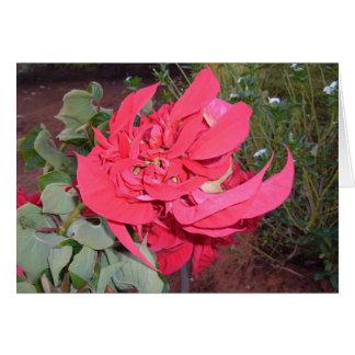 Beautiful Flower Picture Taken in Zambia Greeting Card