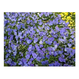 Beautiful Flowers - postcard