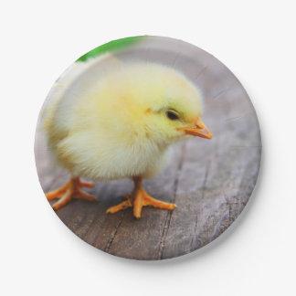 Beautiful fluffy Yellow Chicken Paper Plate