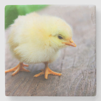 Beautiful fluffy Yellow Chicken Stone Coaster