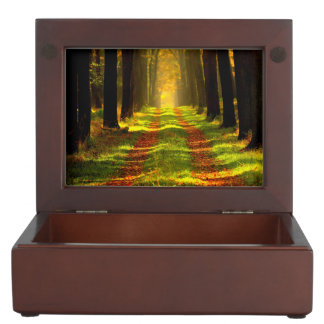 Beautiful Forest in Autumn Memory Boxes