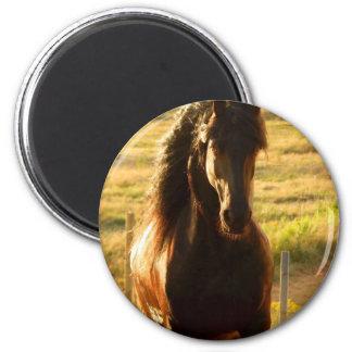 BEAUTIFUL FRIESIAN HORSE STALLION 2 INCH ROUND MAGNET