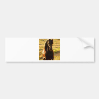 BEAUTIFUL FRIESIAN HORSE STALLION BUMPER STICKER