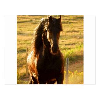 BEAUTIFUL FRIESIAN HORSE STALLION POSTCARD