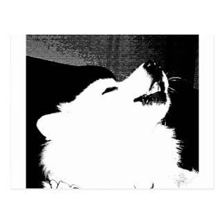 Beautiful furry Samoyed white dog Postcard