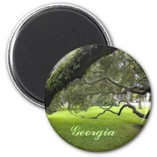 Beautiful Georgia Oak and Green Lawn Magnet
